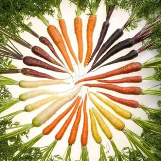 Multi-coloured+carrots+are+coming+