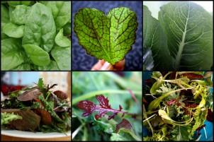experimental-salad-mix1