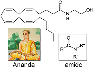 1-anandamide_r3