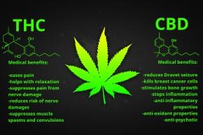 benefits-thc-cbd