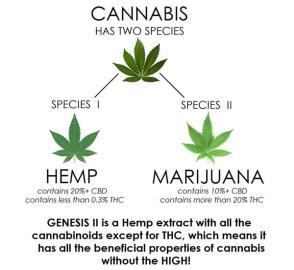 Cannabis-vs-Hemp1
