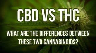 CBD-Vs.-THC-800x445