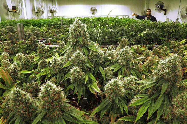 ct-legal-marijuana-stirs-hope-in-illinois-town-20151005