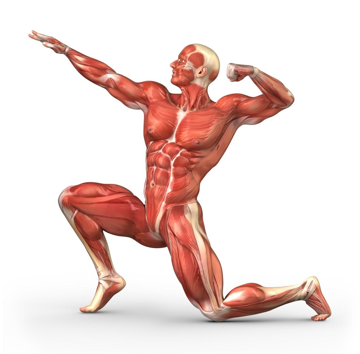 MuscularManPosing1